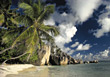 Beaches with Tropical Palm Trees, Maldives stock image