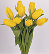 Stock Photo : Floral Stock Photography: Bouquet of Yellow Tulips