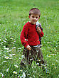 Stock Photo : Grass Stock Photography: Boy On A Walk, On The Spring Meadow Among The Flowers