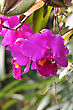 Vibrant Bright Cattleya Orchid Flowers stock photo