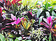 Colorful Tropical Plants ,Close Up stock photo