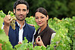 Vacation Couple Of Wine-growers In Vineyards stock photo