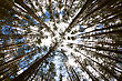 In The Deep Forest. Looking Up, Shot With Fisheye Lens stock photography