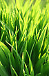 Growth Stock Image: Fresh Green Grass And Sunlight Background