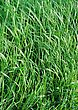 Green Grass Field Or Meadow stock photography