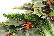 Stock Photo : Symbolic Stock Photography: Holly Berry Plant With Red Berries On White Background, Christmas Decoration
