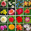 Kaleidoscope Of Sixteen Different And Colorful Flowers