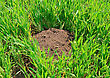 Stock Photo : Field Pictures: Mole's Work In Fields On Ferm