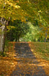 Path in the Fall stock photography