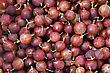 Red Gooseberry Close-up Background stock photography