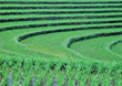 Stock Photo : Rice Stock Image: Rice Paddy