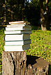 Stack Of Books Laying Outdoors On The Stump stock photography