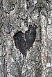 Stock Photo : Augustine St Stock Photo: Stylized Love Symbol On A Trunk Of Birch