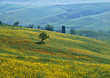 Italy Summer Hills, Tuscany, Italy stock photo