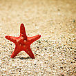 Summer Vacations Starfish Sea Sand Beach stock image