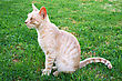 Friends Tawny Cat On Green Grass stock photography