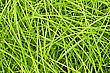 Stock Photo : Lush Pictures: Texture Of The Green Fresh Grass