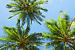 Three Palms On The Blue Sky Background stock photography