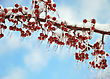 Weather Tree Branch With Icy Red Berries stock photography