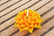 Stock Photo : Celebrate Pictures: Yellow Flower Candle Isolated On Mat Background.